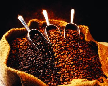 Povestea Cafelei 3