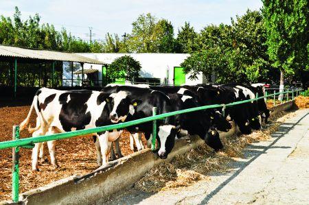 Vendingul estival cu lapte O POVESTE CU Şi DESPRE VĂCUŢE