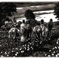 Sclavia pe plantațiile de cafea – o istorie adevărată De la începuturile sale obscure din Africa de Est a secolului al XV-lea unde era folosită ca un stimulent al devotamentului...