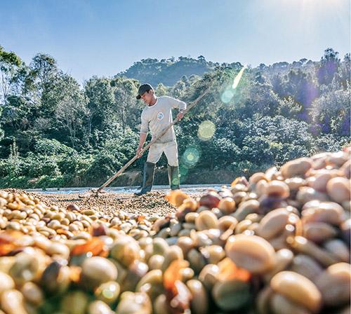 Ce e nou pe piața cafelei? (partea a 2-a)